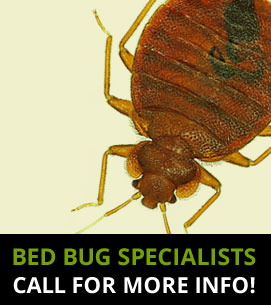 Bed Bug Specialists Farnborough