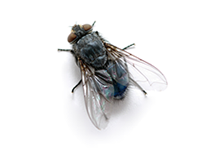 Flies Pest Control Farnborough