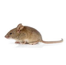 Mice Pest Control Farnborough